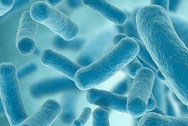 Les probiotiques: des alliés de votre santé